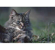"""Chat - Cat  """" Tchink boom"""" 01 (c)(t) ) by Olao-Olavia / Okaio Créations 300mm  f.2.8 canon eos 5  1989 Photographic Print"""