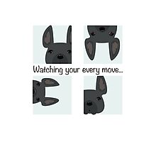 Watching your every move! French Bulldog custom work Photographic Print