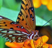 Monarch Butterfly Resting Sticker