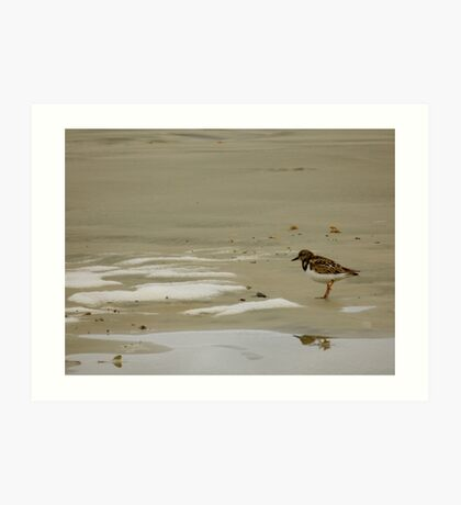 Saint Augustine Beach Wildlife Art Print