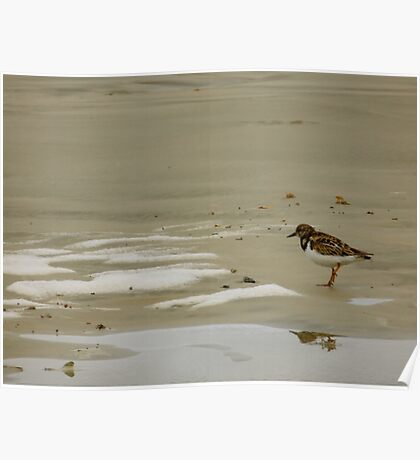 Saint Augustine Beach Wildlife Poster