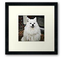 Smiling Dog Framed Print
