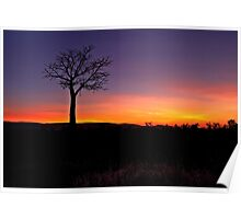 Boab Sunset ~ Parrys Creek Poster