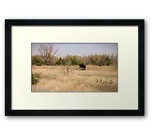 King Bull Framed Print
