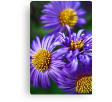 Wild & Beautiful Fall Aster Canvas Print