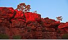 Sunrise at Durba Springs ~ Along the Canning Stock Route by Robert Elliott