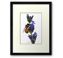 Bee on the Lavender Framed Print