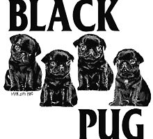black pug by darklordpug