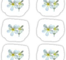 Frangipani - White and Yellow Sticker