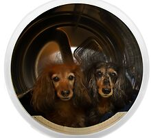 Dachshunds in the Dryer by Randy Turnbow
