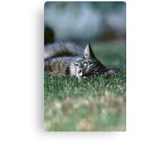 "Chat - Cat "" Tchink boom"" 03 (c)(t) ) by Olao-Olavia / Okaio Créations 300mm f.2.8 canon eos 5 1989  Canvas Print"