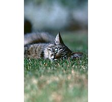 """Chat - Cat """" Tchink boom"""" 03 (c)(t) ) by Olao-Olavia / Okaio Créations 300mm f.2.8 canon eos 5 1989  Photographic Print"""