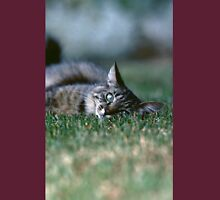 "Chat - Cat "" Tchink boom"" 03 (c)(t) ) by Olao-Olavia / Okaio Créations 300mm f.2.8 canon eos 5 1989  Unisex T-Shirt"