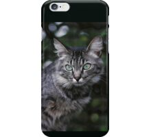 """Chat - Cat """" Tchink boom"""" 04 (c)(t) ) by Olao-Olavia / Okaio Créations 300mm f.2.8 canon eos 5 1989  iPhone Case/Skin"""