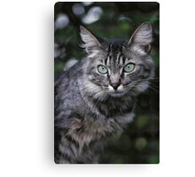 "Chat - Cat "" Tchink boom"" 04 (c)(t) ) by Olao-Olavia / Okaio Créations 300mm f.2.8 canon eos 5 1989  Canvas Print"