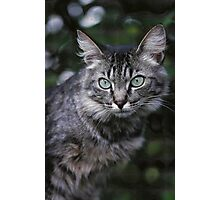 """Chat - Cat """" Tchink boom"""" 04 (c)(t) ) by Olao-Olavia / Okaio Créations 300mm f.2.8 canon eos 5 1989  Photographic Print"""