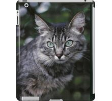 "Chat - Cat "" Tchink boom"" 04 (c)(t) ) by Olao-Olavia / Okaio Créations 300mm f.2.8 canon eos 5 1989  iPad Case/Skin"
