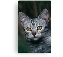 """Chat - Cat """" Peluche """" 01 (c)(h) ) by Olao-Olavia / Okaio Créations 300mm f.2.8 canon eos 5 1989  Canvas Print"""
