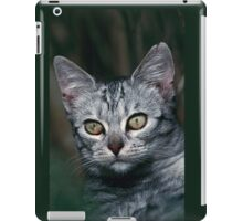 "Chat - Cat "" Peluche "" 01 (c)(h) ) by Olao-Olavia / Okaio Créations 300mm f.2.8 canon eos 5 1989  iPad Case/Skin"