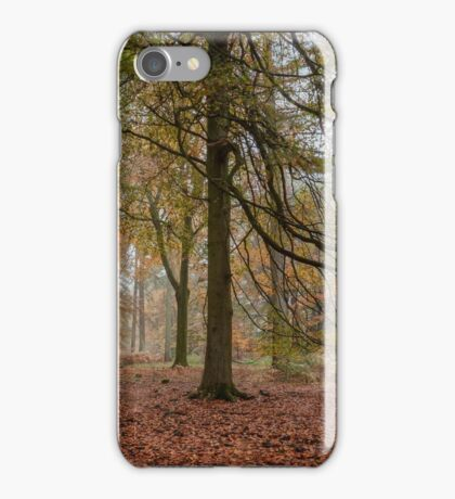 Amongst the Beech Trees iPhone Case/Skin