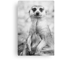 Meerkat portrait Canvas Print