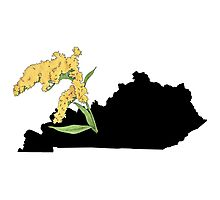 Kentucky Silhouette and Flower Photographic Print