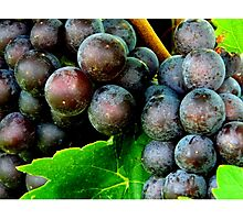 SWEET from the Vine  ^ Photographic Print