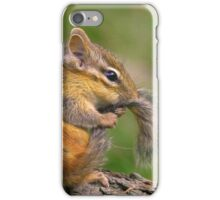 Chipmunk grooming his tail iPhone Case/Skin
