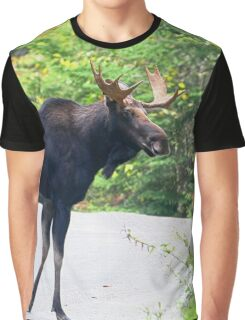 Maine Bull Moose on the road Graphic T-Shirt
