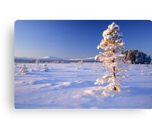 Snow covered trees in north Sweden Canvas Print