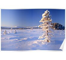 Snow covered trees in north Sweden Poster