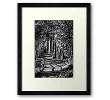 A walk in the woods B&W Framed Print
