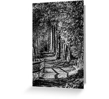 A walk in the woods B&W Greeting Card
