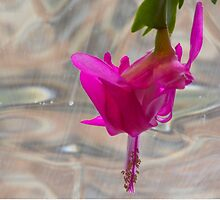Studies in Glass Brick #3--Christmas Cactus by Imagery