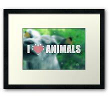 I love animals. Goat blurred photo. Framed Print