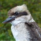 Kookaburra Portrait 1 by Trish Meyer
