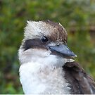 Kookaburra Portrait 2 by Trish Meyer