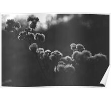 Winter Flowers in a sunset black and white Poster