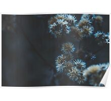 Winter flower things 3 Poster