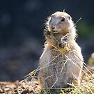Prarie Dog by Ellesscee