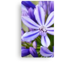 Agapanthus Brush strokes Canvas Print