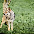 Timber Wolf by JEZ22