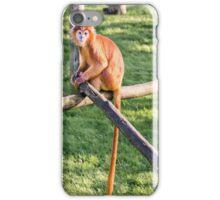 Javan Langur iPhone Case/Skin
