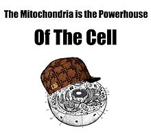 The Mitochondria of The Cell Photographic Print