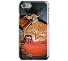 Quixote,Orange Cat,Orange Belt iPhone Case/Skin
