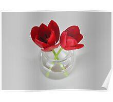Red tulip still life Poster