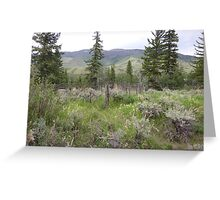 Colorado Burial Site  Greeting Card