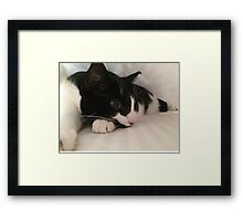 Zorro Under Cover/Tumble Dry Low Framed Print