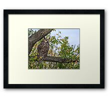 Owl on the Lookout Framed Print