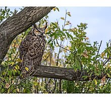 Owl on the Lookout Photographic Print